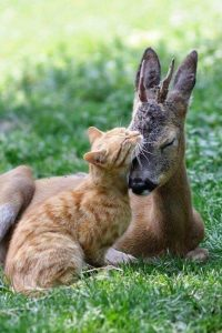 roommates, master room, petaling jaya, Looking for roommate that loves animal